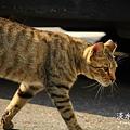 淡水有貓 (08).JPG