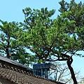 松園別館 (45).JPG