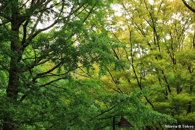 上野公園 (36).JPG