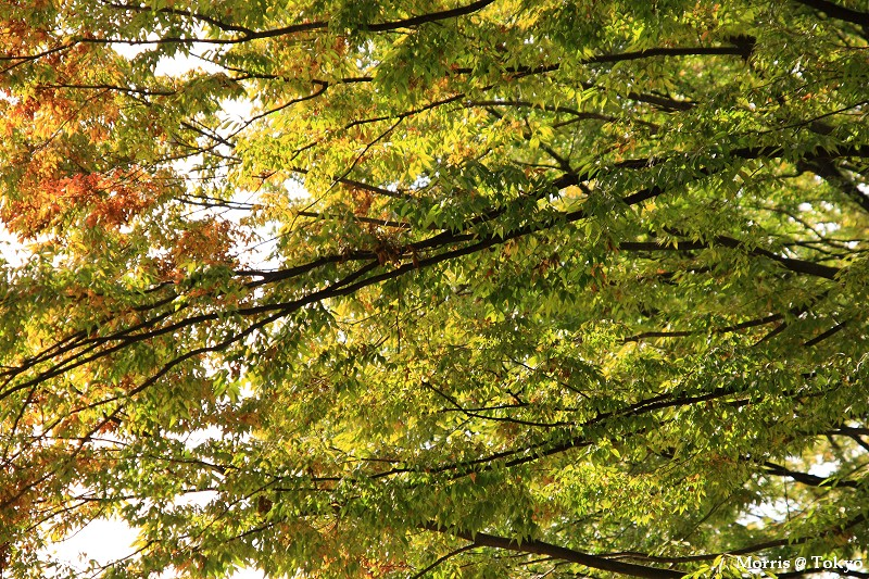 上野公園 (38).JPG