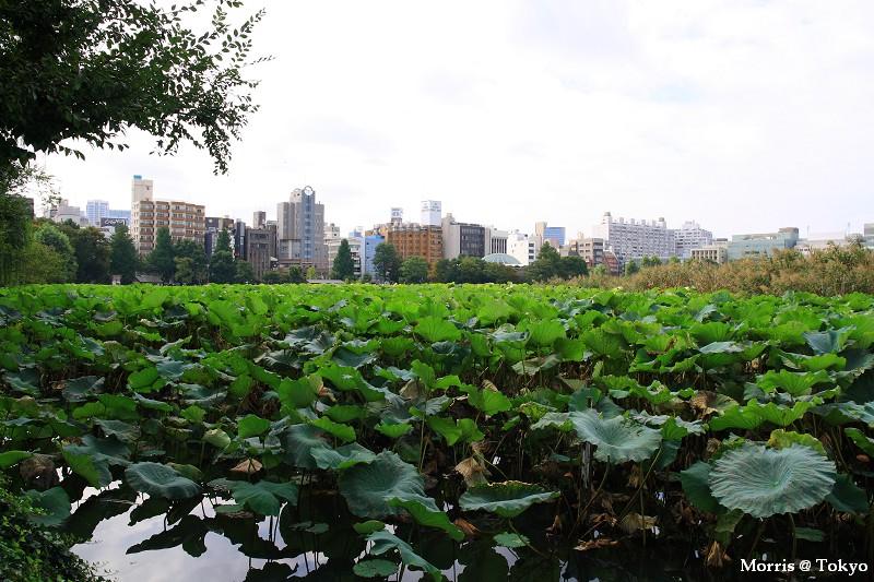 上野公園 (44).JPG