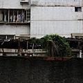 細雨‧青田街 (01).JPG