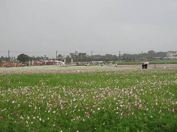 100-11-19新社花海10.JPG