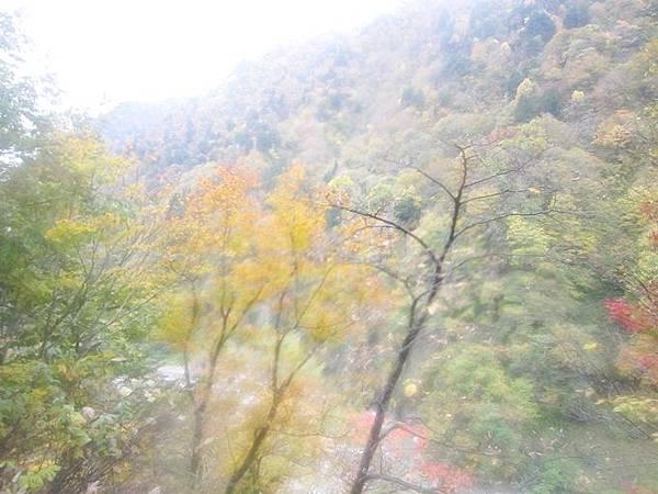 101年11月日本旅遊 (365)