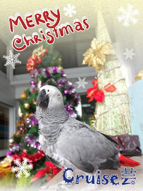 2012年網路用聖誕卡-賓拷貝