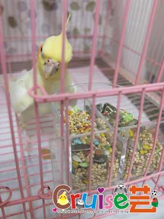 美國布朗氏-安可系列-中小型鸚鵡 (3)