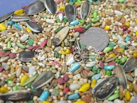 美國布朗氏-安可系列-中小型鸚鵡 (12)