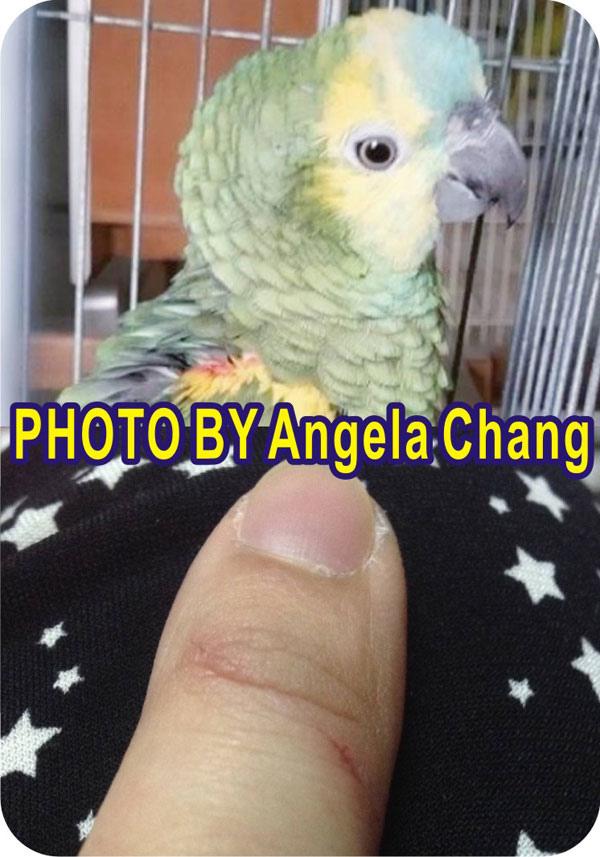 Angela-Chang