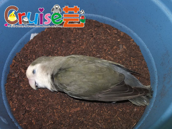 151024蘆亡-(9)