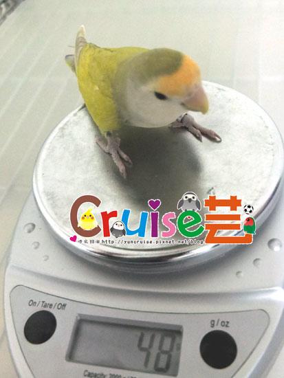 杏-(2)