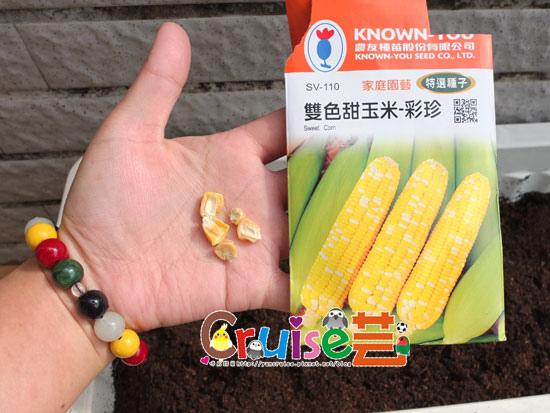 151129-玉米-(2).jpg