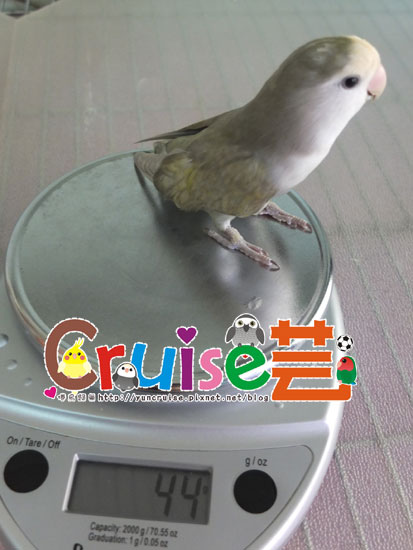 松-(3)