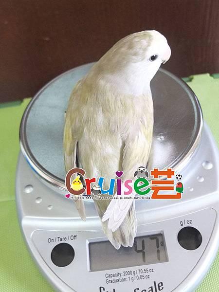 松-(2)