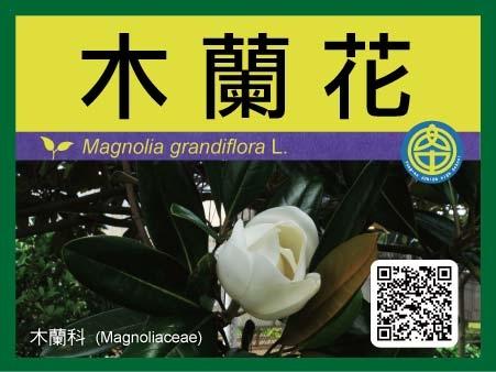 永安國中植物牌-小型-09.jpg