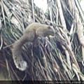 公園內可愛的松鼠