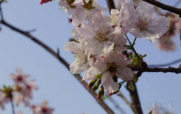 20140315-_DSC0059.jpg
