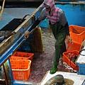 船艙都是保鮮的冰水,上面滿滿的都是魚