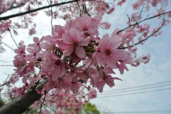 2014_0301AI.JPG