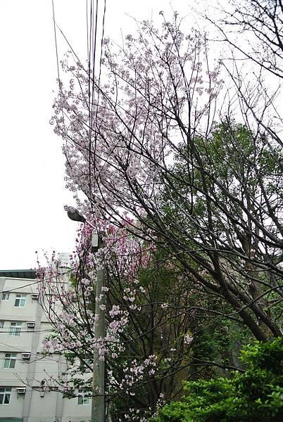 2014_0312BR.JPG