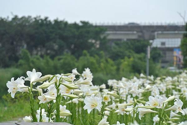 2014_0526AG.JPG