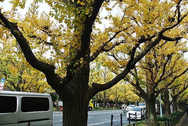 2015_1130DR.JPG