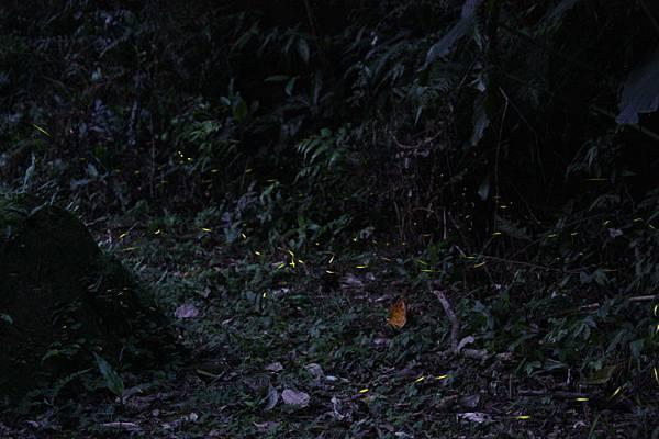 200801040004.jpg