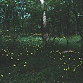 2014螢火蟲拍攝.jpg