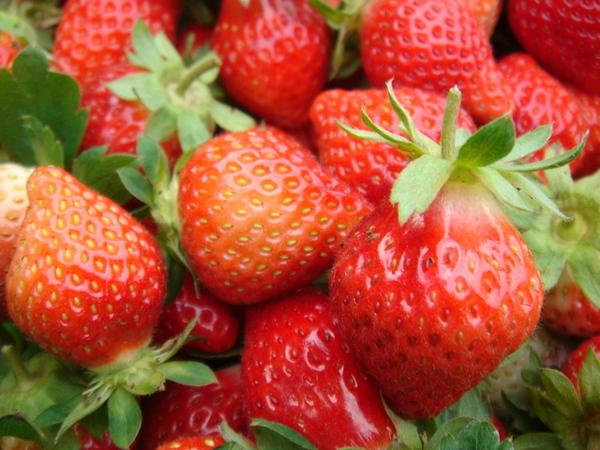 草莓進拍特寫