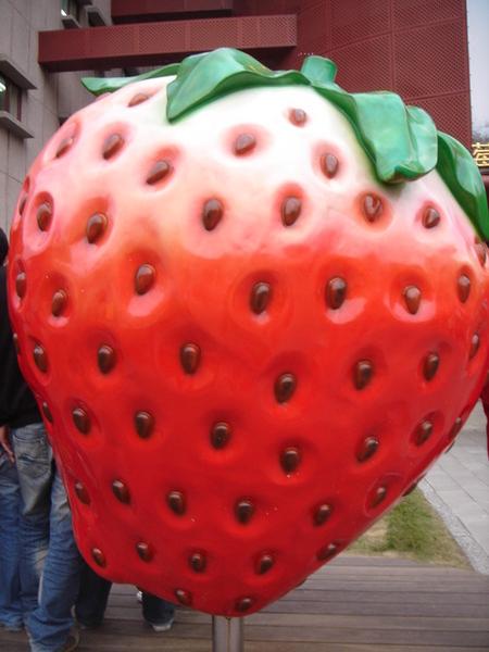 傳說中的大湖草莓