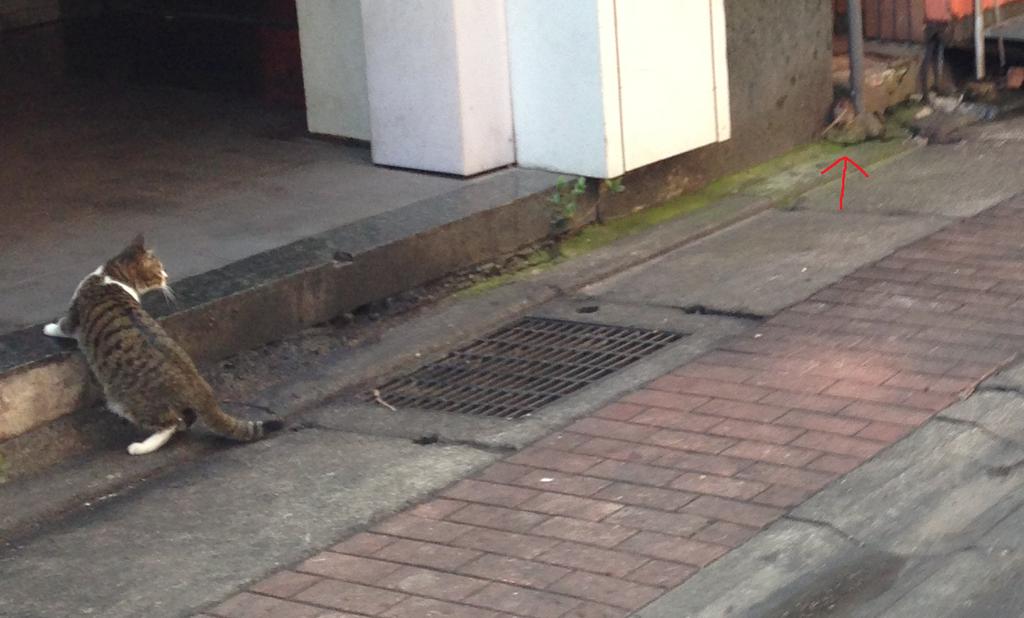 永平路的老鼠2