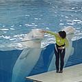 小白鯨跳麥阿喜