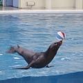 失控的海獅or海豹