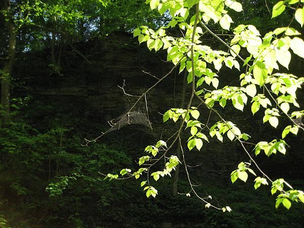 有一隻蜘蛛,結網真辛苦