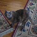 06/17/2008 大肥貓暱稱是Peachy