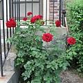 玫瑰葉落胭脂色