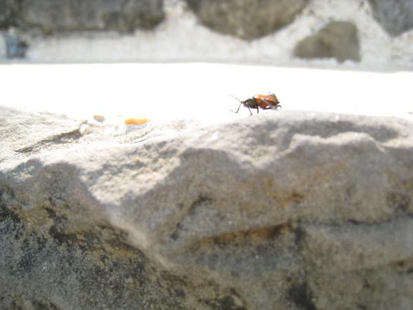 在門口等待入場時巧遇某一昆蟲.JPG