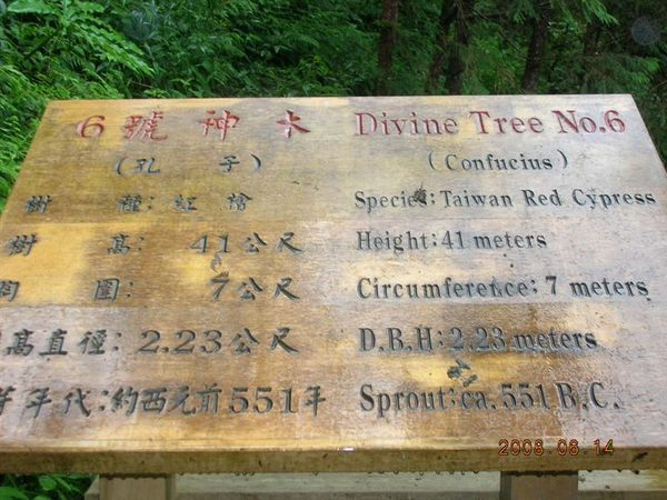 03棲蘭-孔子神木