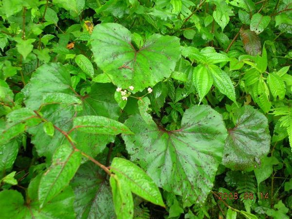 05棲蘭-是山葵吧