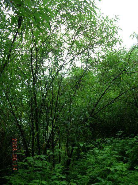06棲蘭-一片樹林