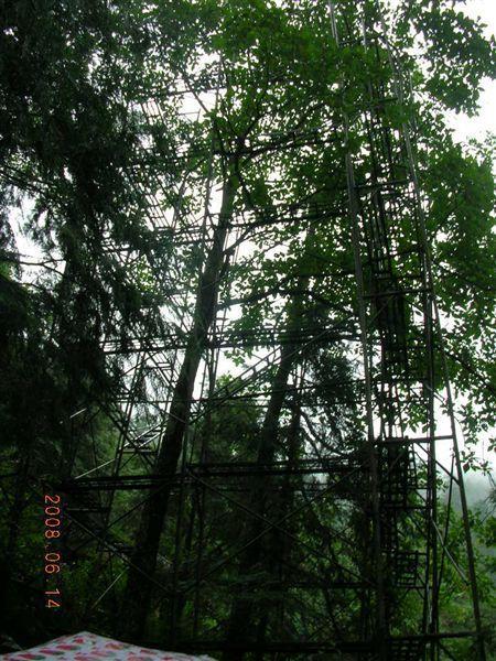 07棲蘭-又一片樹林