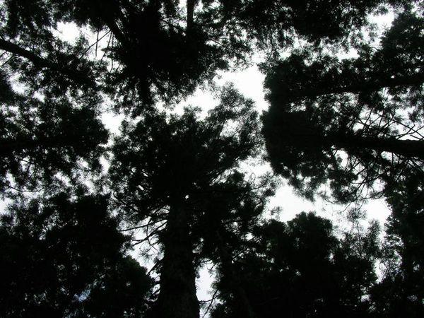 41茂興步道-看天