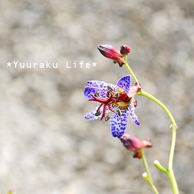life13187