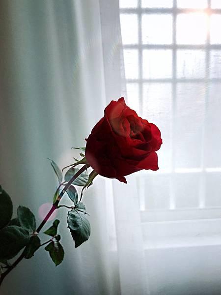 玫瑰少年_190226_0016.jpg