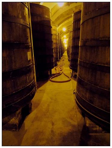 Florio酒窖1.jpg