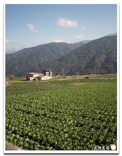 武陵農場25.jpg