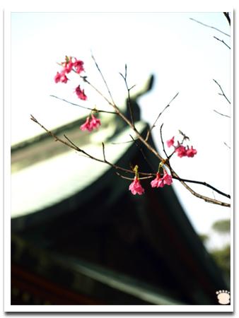 桃園神社6.jpg