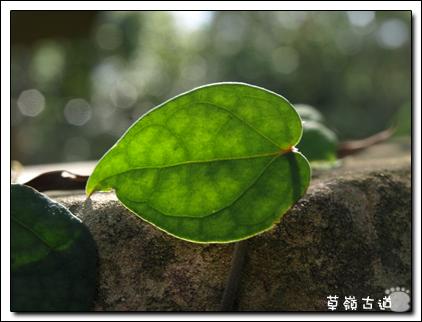 2008草嶺古道-7.jpg