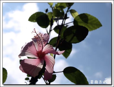 2008草嶺古道-10.jpg
