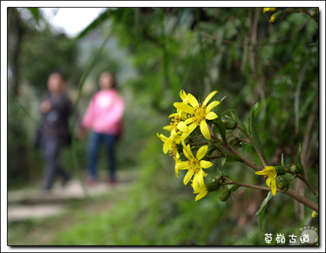 2008草嶺古道-12.jpg