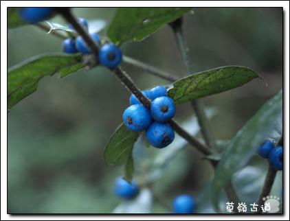 2008草嶺古道-16.jpg